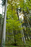 Summer woods. A temperate deciduous forest as seen in summer Stock Photos