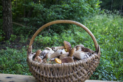 In the summer in the woods basket with mushrooms. Royalty Free Stock Images