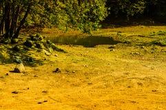 Summer Woods Natural Landscape Stock Photos
