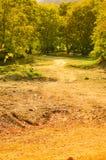 Summer Woods Natural Landscape Royalty Free Stock Images