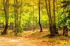 Summer Woods Natural Landscape Stock Image