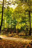 Summer Woods Natural Landscape Royalty Free Stock Photography