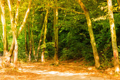 Summer Woods Natural Landscape Royalty Free Stock Photo
