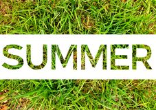 Summer word cut white background on sunshine green grass. Sale or holiday lettering for package design stock image