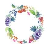 Summer wreath of berries Stock Photo