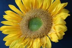 Summer& x27; luz do sol de s Fotos de Stock