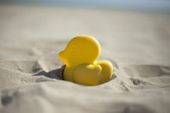 Summer yellow duck beach toy affix in the dry sand. Selective fo Stock Photography