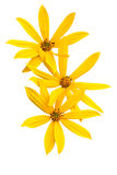 Summer yellow  flower Stock Images