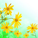Summer yellow  flowers Royalty Free Stock Images
