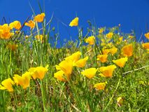 Summer Yellow Flowers. Yellow flowers bathed in the bright midday summer sun Stock Photo