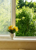 Summer yellow flowers on widnow - sill at the morning Royalty Free Stock Image