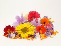 Summerflowers Royalty Free Stock Photo