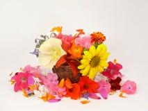Summerflowers Royalty Free Stock Photos