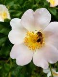Summerflowers στοκ εικόνα με δικαίωμα ελεύθερης χρήσης