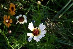 Summerflowers mignons image stock