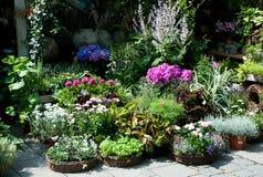 Summerflowers opulentos fotografia de stock royalty free