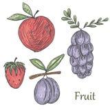 Summerfruit Arkivbilder