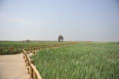 Summerhouse auf dem Reedgebiet Lizenzfreies Stockfoto