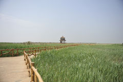 Summerhouse in the reed field. The swamp field, in Dongyin, where the yellow river meets the Bo Hai sea Shandong, China Royalty Free Stock Photo