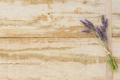 Summerly background with lavender Royalty Free Stock Images