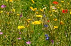 Summerly fält av wild blommor royaltyfri fotografi