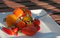Summerly Harvest 3. Variety of tomatoes on a plate in the evening sun, high depth of field Royalty Free Stock Image