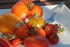 Summerly Harvest 8. Variety of tomatoes on a plate in the evening sun Royalty Free Stock Photo