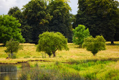 Summers day in the English countryside with stream and deer Royalty Free Stock Image