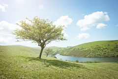 Summers Day Tree Stock Image