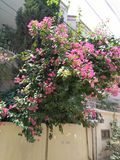 Summers in Pakistan. Hot summers blooms some flowers Stock Photos