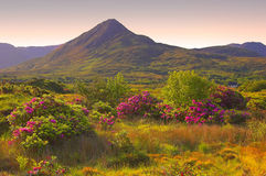 Summertime. Summer Connemara, Co.Galway, Ireland with wild flowers, grass and heather Stock Photography