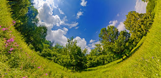 Summertime. Panoramic shot of a meadow and forest with high sky royalty free stock image