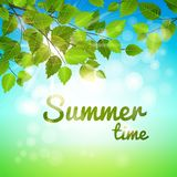 Summertime background with fresh green leaves Royalty Free Stock Images