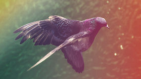 Summertime Bird. Mid Air shot of bird with a summer feel to it Stock Images