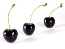 Summertime: black cherry stock photography