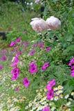 Summertime border flowers Stock Images