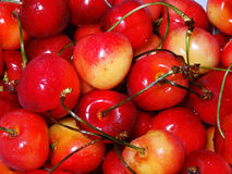 Summertime Cherries. Ranier cherries are bright red and juicy. Sweet healthy goodness Stock Images