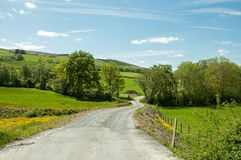 Summertime country lane and trees in the British countryside. Royalty Free Stock Photography