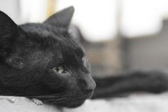 Summertime Daydream Cat. A beautiful young green-eyed black cat is resting at the porch Royalty Free Stock Photography