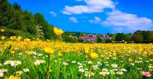 Summertime. Exeter Summertime buttercups royalty free stock photo