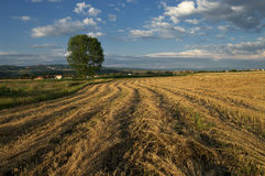 Summertime. Field after harvest Stock Images