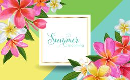 Summertime Floral Poster. Tropical Plumeria Royalty Free Stock Photography