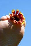Summertime - Foot flower Stock Photos