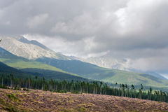 Summertime landscape with forest felling in the foreground against the background of mountains High Tatras Royalty Free Stock Photo