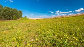 Summertime meadow under blue sky Royalty Free Stock Photo