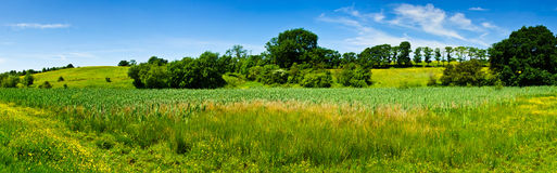 Summertime meadows Royalty Free Stock Photography