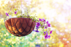 Summertime. Nature background Royalty Free Stock Images