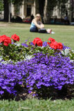 Summertime park. Flower bed in a park during the summer in Imperial park, Cheltenham stock photos