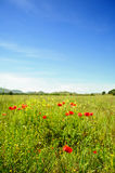 Summertime with poppies. Field at summertime with poppies and wildflowers royalty free stock photo