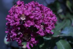 Summertime purple and greenery Royalty Free Stock Images